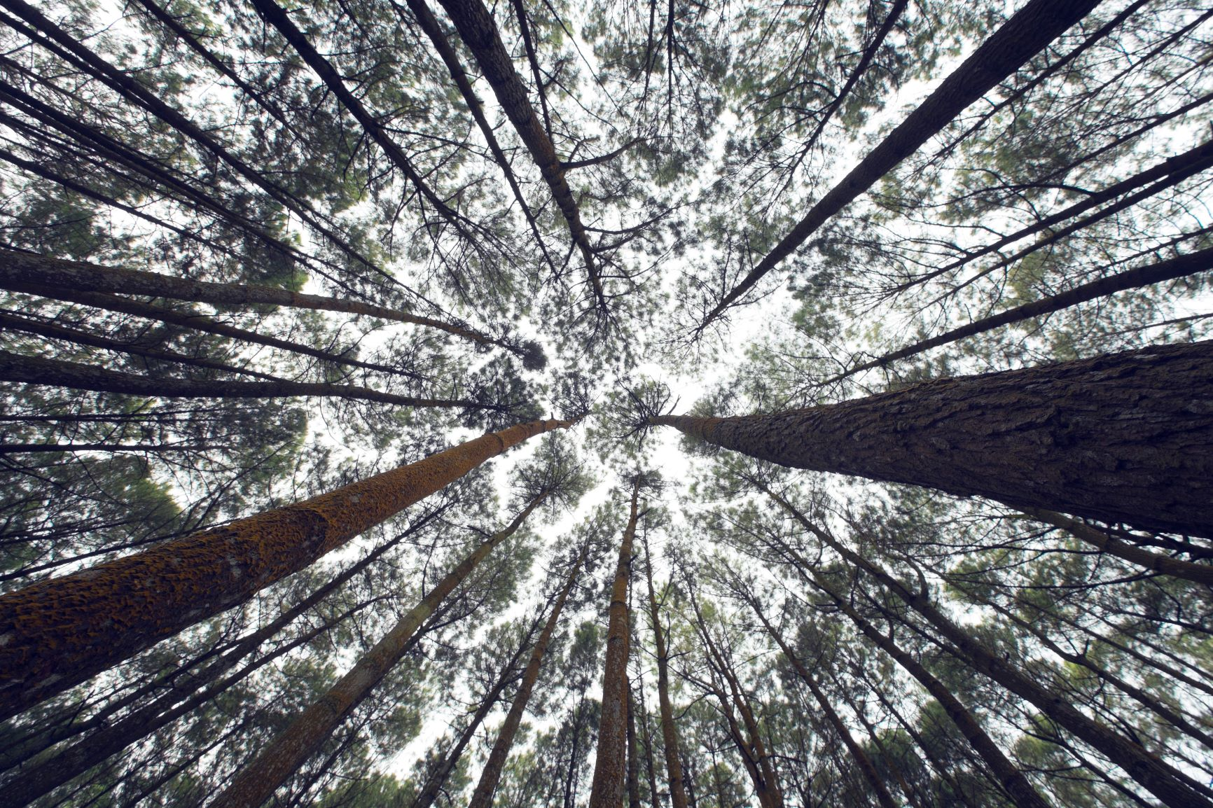 Canva - Trees in the forest.jpg